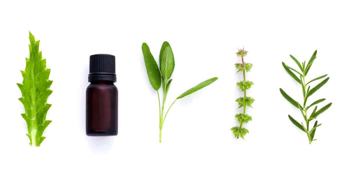 Some herb extracts, such as thyme, sage, oregano and rosemary, have antimicrobial properties.