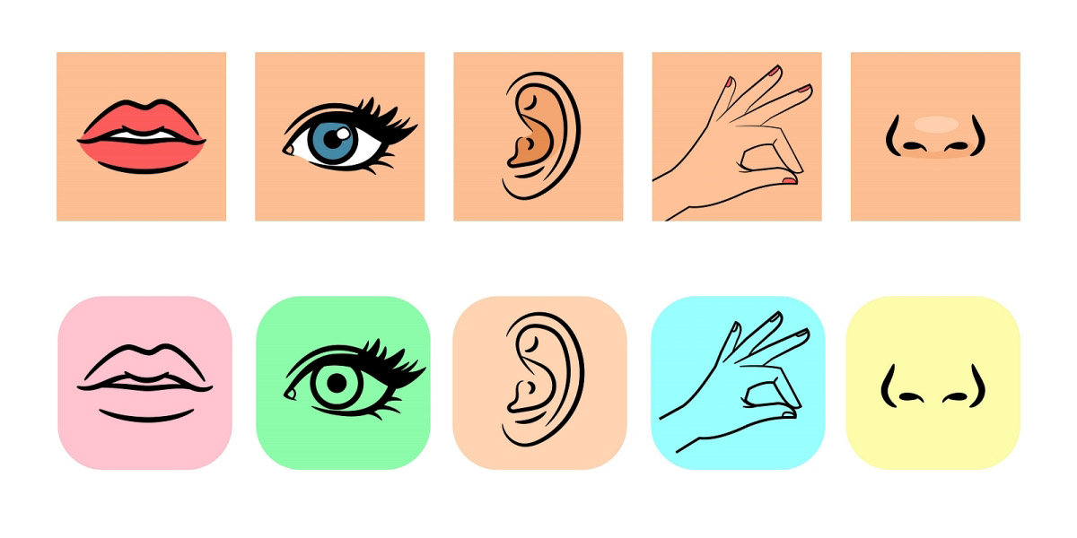 Senses icons. Five human illustrative senses vector illustration, taste and smell, line and color icons